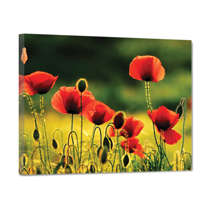"изображение картина на холсте ""алые маки"" 40х50 см от интернет-магазина Decoretto"